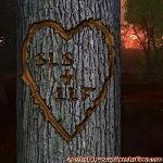 Proof of Love between SLS and LLF