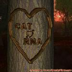 Proof of Love between CAT and RNA