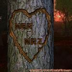 Proof of Love between NER and NRZ
