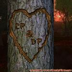 Proof of Love between CP and DP