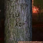 Proof of Love between TLU and ACF