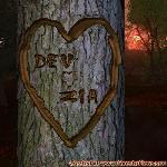 Proof of Love between DEV and ZIA