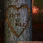 Proof of Love between JDT and MLC